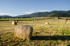 Bale of hay on field Stock Image