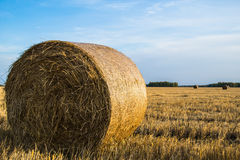 Bale hay on the field Stock Image