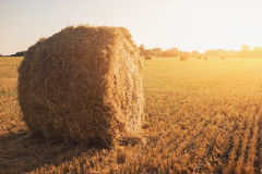Bale of hay on field. Royalty Free Stock Photos