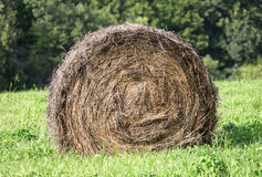 Bale of hay in the field Royalty Free Stock Photos