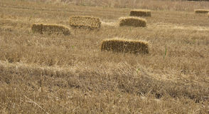 Bale Of Hay harvested Stock Images