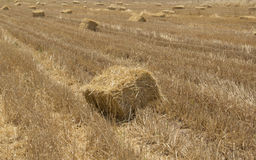 Bale Of Hay harvested  Royalty Free Stock Photos