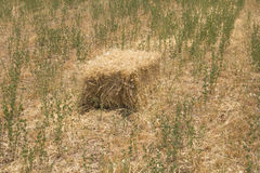 Bale Of Hay harvested Royalty Free Stock Image