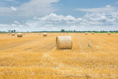 Bale of hay on harvesting field Stock Images