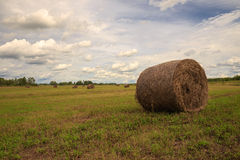 The bale of hay Stock Photography