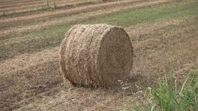 Bale of hay stock video