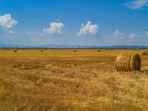 Bale of hay on a mown field Royalty Free Stock Photos