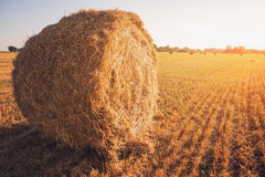 Bale of hay. Royalty Free Stock Photo