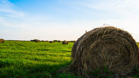 A bale is a hay Stock Photography