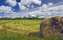 Bale of hay on ranch Royalty Free Stock Photos