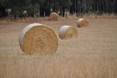 Bale of hay round Royalty Free Stock Image