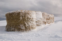 Bale of hay on the snow. Bales of hay after the snowy storm Stock Images