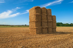 Bale of Hay Straw,Blue Sky Stock Image