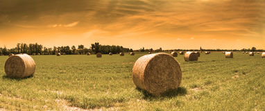 Bale of hay at sunset Stock Photo