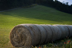 Bale of hay at sunset in Italy. Bales of hay in June Stock Photos