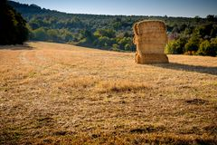 Bale of hay in a wheat field Royalty Free Stock Photos