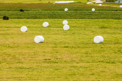 Bale of hay wrapped in plastic foil Royalty Free Stock Photos