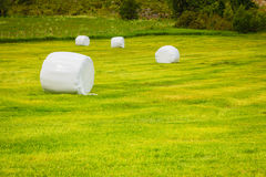 Bale of hay wrapped in plastic foil, Norway Stock Photo