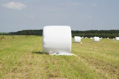 Bale of hay wrapped in plastic Stock Photos