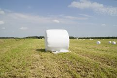 Bale of hay wrapped in plastic Stock Photo