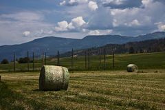 Bale of hey Stock Images