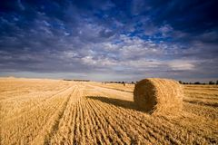 Bale in landscape Royalty Free Stock Image