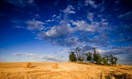 Bale in landscape Stock Image
