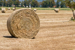Free Bale Of Hay Royalty Free Stock Photo - 25049705