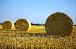 Bale Of Hay On Agriculture Field Stock Photos