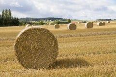 Free Bale Of Straw Royalty Free Stock Photos - 36492818