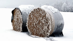 Free Bale Of Straw Royalty Free Stock Photos - 3939298