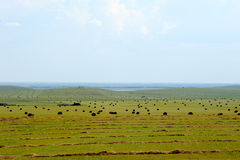 Bale on the prairie in Inner Mongolia Royalty Free Stock Photography