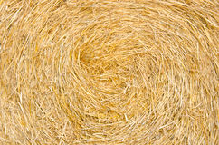 Bale roll straw Stock Images