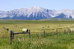 Free Bale Rolled Hay Field Alberta Royalty Free Stock Images - 124447369