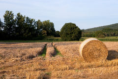 Bale of straw. A bale of straw on a sunny day before blue sky Stock Photography