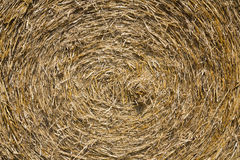 Bale of the straw Stock Images