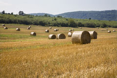 Bale of the straw Stock Photo