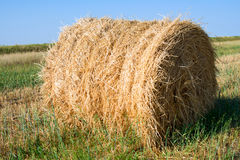 Bale of straw. Rests upon field Royalty Free Stock Image