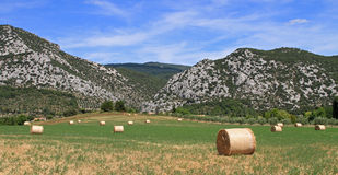 Bale straw and bue sky. Green field of bale straw on blue sky stock photo