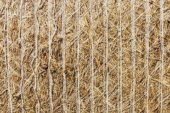 Bale of straw closeup Royalty Free Stock Photos