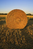Bale of straw on field. In fall Stock Images
