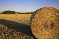 Bale of straw on field. Golden bales of straw on field in fall Royalty Free Stock Photography