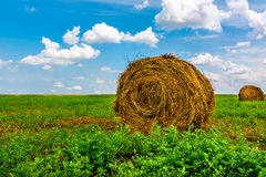 Bale of Straw. Green field, blue sky Stock Images