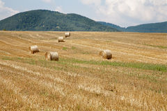 Bale of straw in the landscape Stock Photography