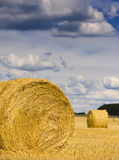 Bale of straw in the meadow. Round bale of straw in the meadow Stock Image
