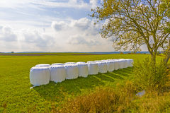 Bale of straw packed in white plastic foil to protect against ba. D weather Royalty Free Stock Images