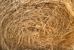 Bale of straw to feed cattle Stock Image