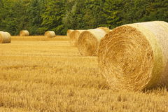 Bale of wheat field Stock Photo