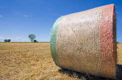 A bale of wheat in the field Royalty Free Stock Image