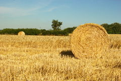 Bale of wheat strows Royalty Free Stock Images